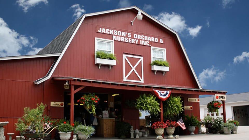 Jacksons Orchard 2